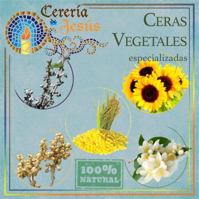 Ceras vegetales especializadas