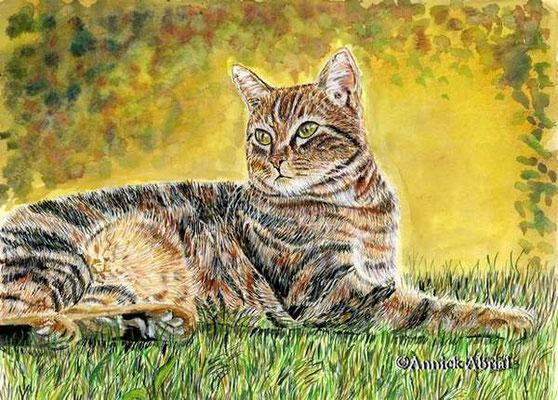 chat tigré - gouache