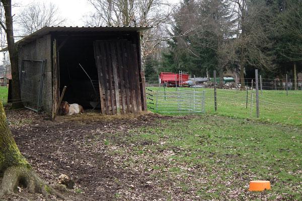 Ziegenfarm Dudweiler