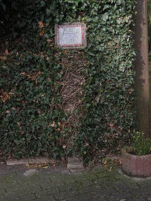 5  Im Scheuergarten