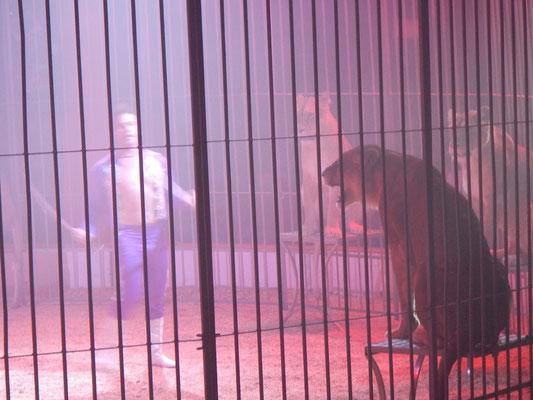 Lionnes peu coopératives lors d'une spectacle d'un cirque de passage sur Montmélian