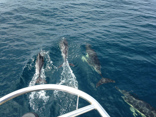 Rencontre avec les dauphins