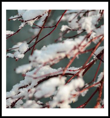 winterzweig - poster - weihnachten - winter - schnee - natur - baum - retro