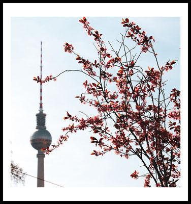 fernsehturm premium poster - tvturm - frühling - natur - jahreszeiten - wandbild - berlin - city