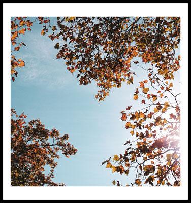 herbst blick premium poster - autumn - wald - himmel - natur motiv - fotografie - wandbild - sonne