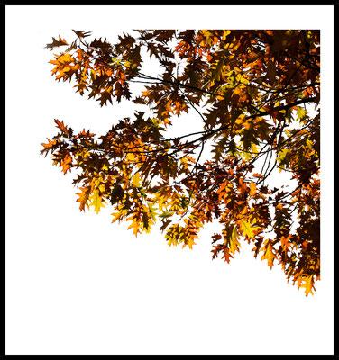 autumn dream premium poster - herbst - jahreszeiten - natur motiv - gelb - laub - baum - fotografie