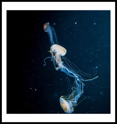 jellyfish trio premium poster - aliens - weltraum - stars -quallen motiv - tier - wandbild