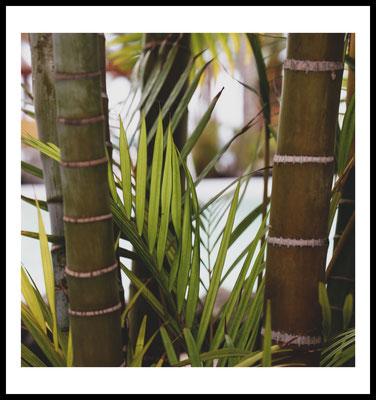 bambus premium poster - natur motiv - fotografie - sommer - pflanze - sommer - jahreszeiten