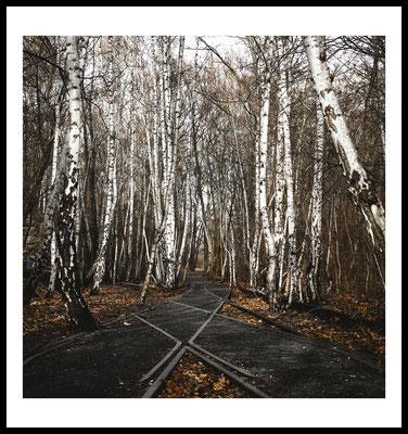 birkenwald premium poster - birke - wald - natur motiv - berlin - autumn - herbst - jahreszeit - laub
