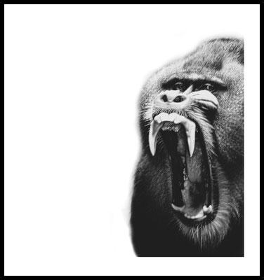 affe premium poster - tier -safari -zoo - wandbild - inneneinrichtung