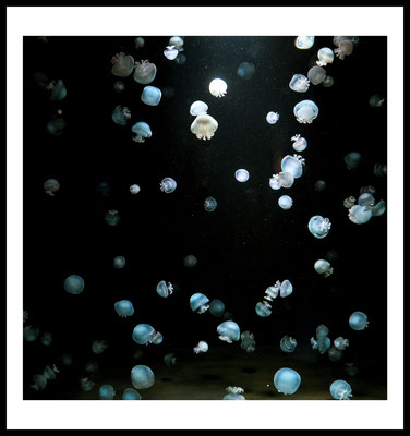 jellyfish army premium poster - aliens - weltraum - stars - universum - wandbild - tier motiv