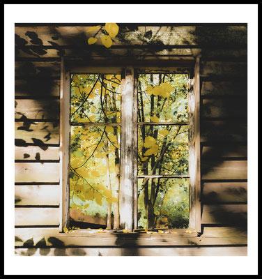 yellow window premium poster - autumn - herbst - holz fenster - gelbe blätter - natur fotografie