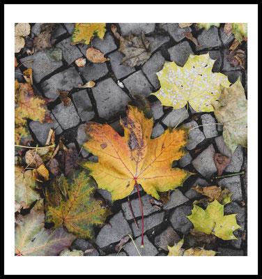 herbst straße premium poster - autumn - laub - city - jahreszeit - natur motiv - weg - fotografie - wandbild