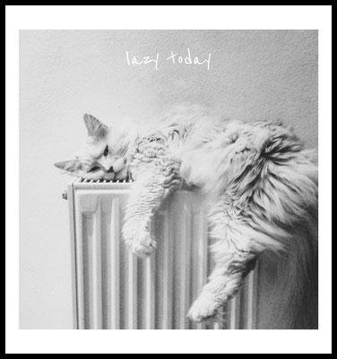 lazy today premium poster - katze - cat - faul - sonntag - tier
