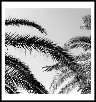 palmzweige sw premium poster - sommer - schwarz weiß - natur motiv - fotografie - pflanzen - bäume