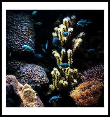 blue fish premium poster - fisch - tier motiv - unterwasser - wandbild