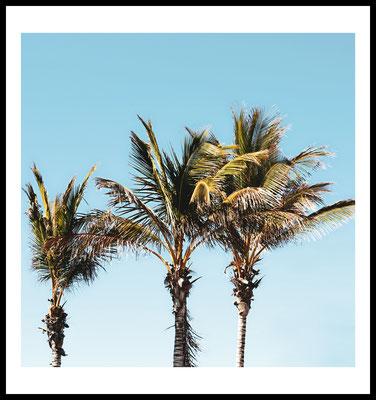 palmentrio premium poster - palmen - natur - sommer motiv - wandbild - fotografie