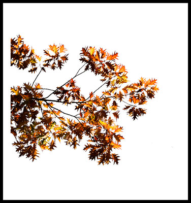 herbst baum premium poster - autumn - jahreszeiten - natur motiv - gelb - fotografie