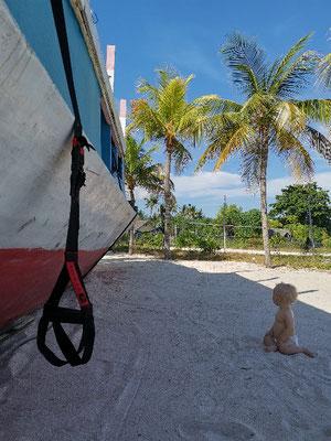 Slingtrainer