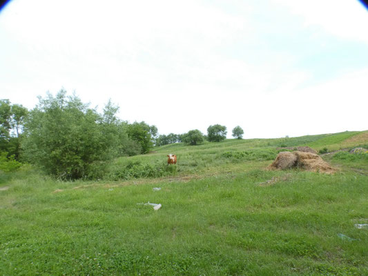 i rilievi lungo le rive del fiume Prut nei pressi di Bajura