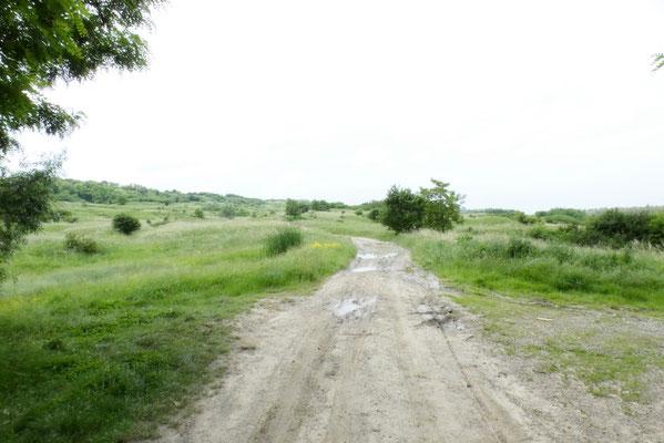 prati magri tenuti a pascolo lungo il Prut nei pressi di Bajura
