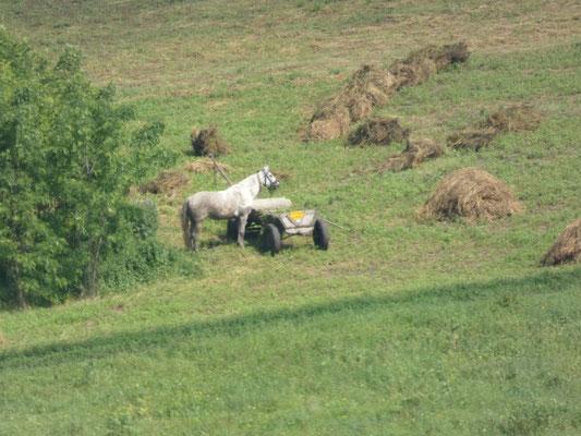 Fienagione  nei dintorni di Darabani, Nord Romania