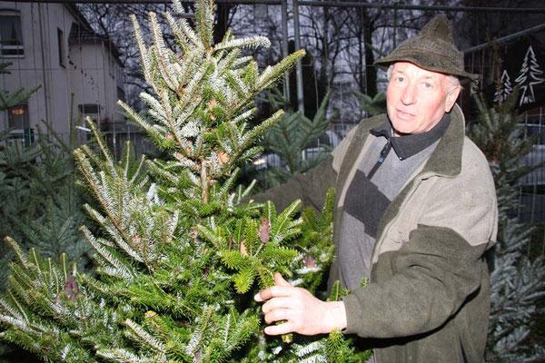 Kurt Müller präsentiert die heimische Weißtanne (Baum des Jahres 2004)