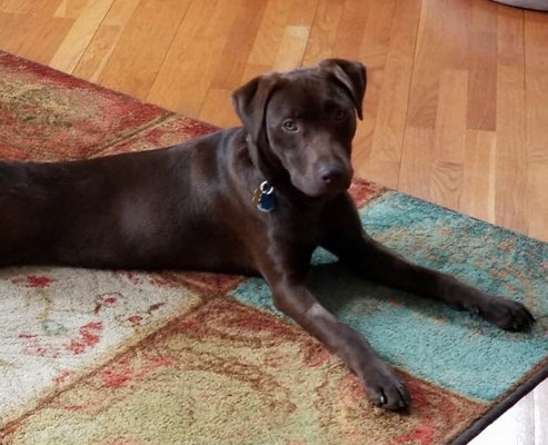 Bruce, ADOPTED!
