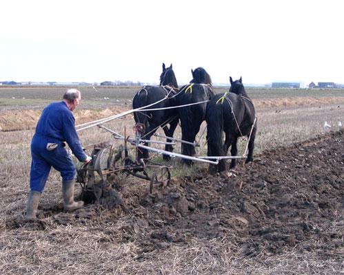 Opperdoes, ploegen met paarden