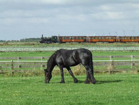 Fries paard met stoomtram Hoorn-Medemblik