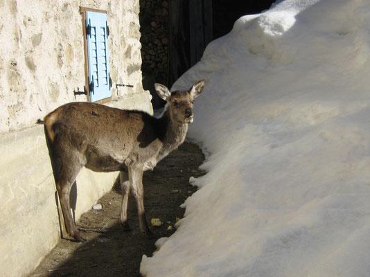 Incontri a pochi passi dall'Abete Rosso, Val di Rabbi, Foto: A. Cicolini