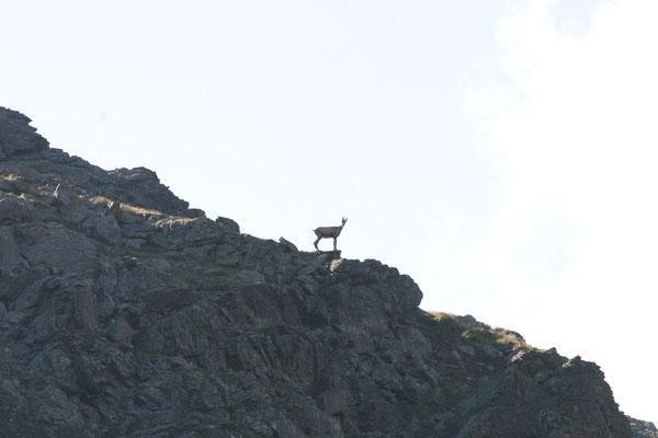 Un attento osservatore, Abete Rosso, Val di Rabbi, Foto: M. Corradini