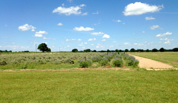 Wonderful adventures at Becker Vineayards in Fredericksburg, Texas