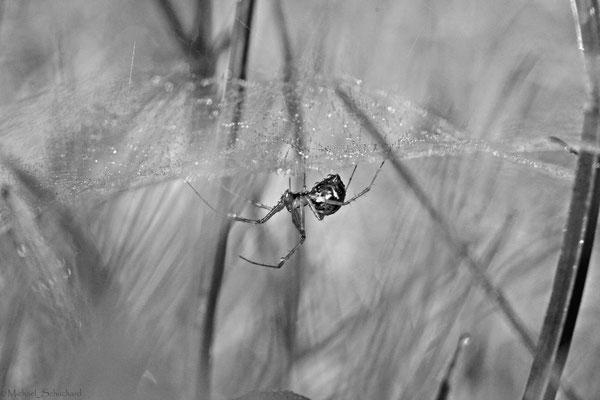 Spinne im Herbst in der Wiese