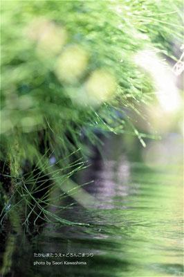 マキノの湧水。お水がいいから米どころ。