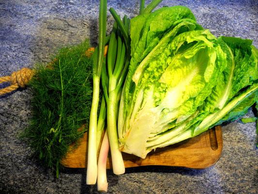 Fenchel/Dill, Frühlingszwiebeln und Romana Salat