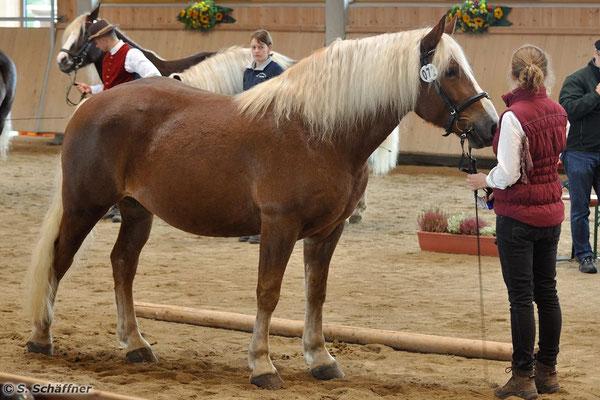 Bundesprämienstute Rhea von Lasse wurde Siegerstute bei den 4-5-jährigen Stuten