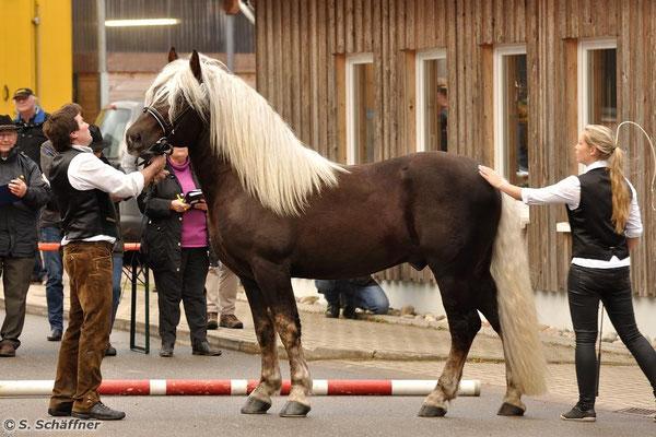 Wilano ist im Besitz von Andrea Meier aus Adlkofen (Bayern)