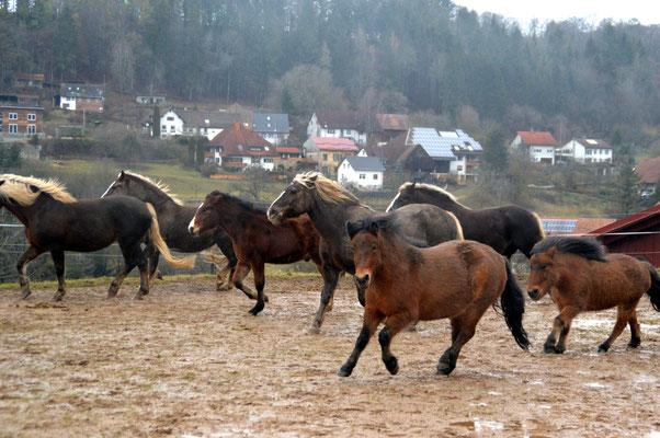 Die Herde am toben im Matsch!
