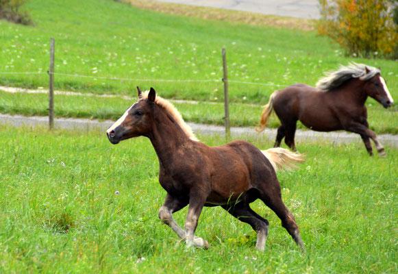 Viano hat mit Vroni eine tolle junge Pferdebesitzerin in Bayern gefunden!
