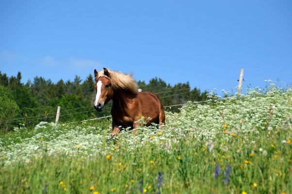 Amika wohnt mittlerweile in der Nachbargemeinde Dachsberg im Schwarzwald!
