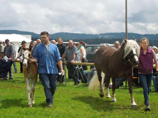 Der Hengstanwärter steht beim Haupt- und Landesgestüt Marbach