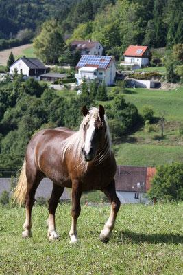 Heute lebt Aleska in NRW