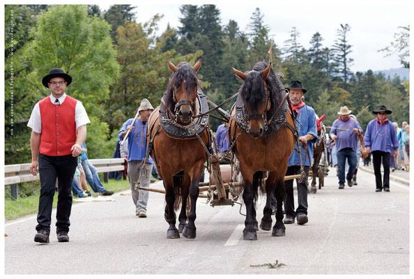 Anastacia (links) beim Rossfest 2013. Heute lebt die Stute in der Schweiz.