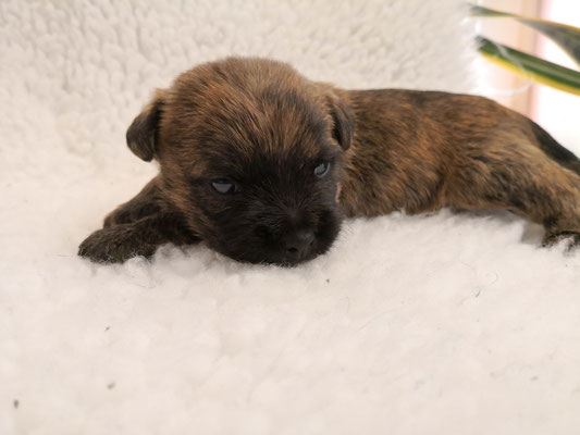 Mailo - drei Wochen alt