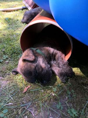 Arno schläft im Abwasserrohr.
