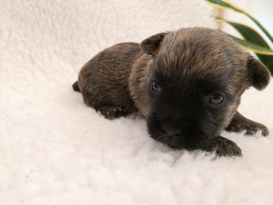 Motte - drei Wochen alt