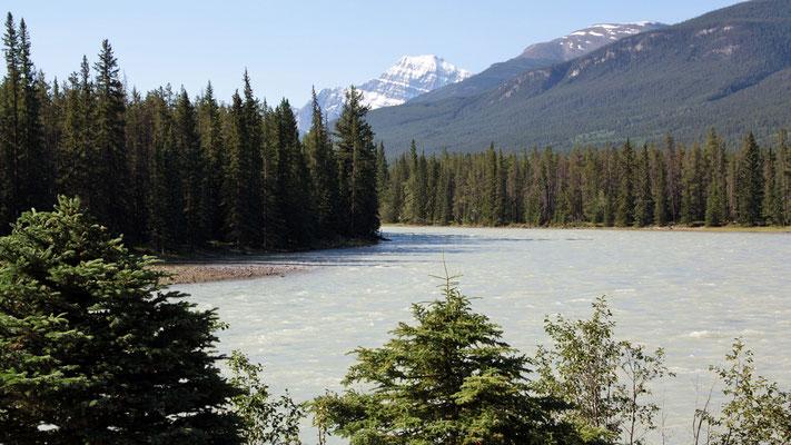 Der Athabasca River nimmt sich seinen Platz
