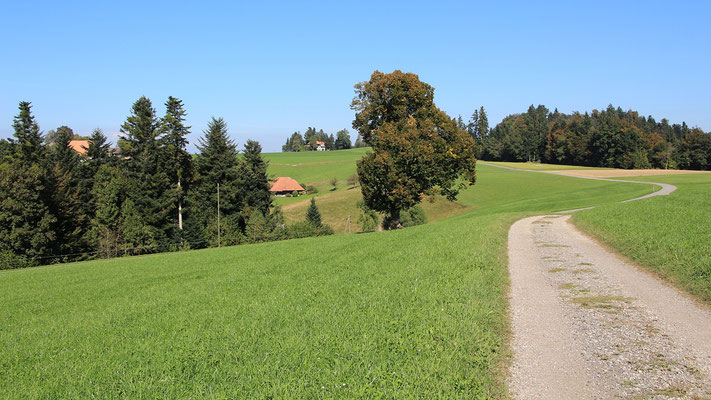 oberhalb Schufelbüel, Blick zurück nach Neuegg