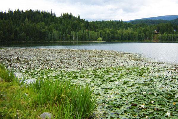 Am Dutch-Lake